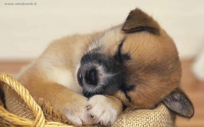 Un dolce cucciolo
