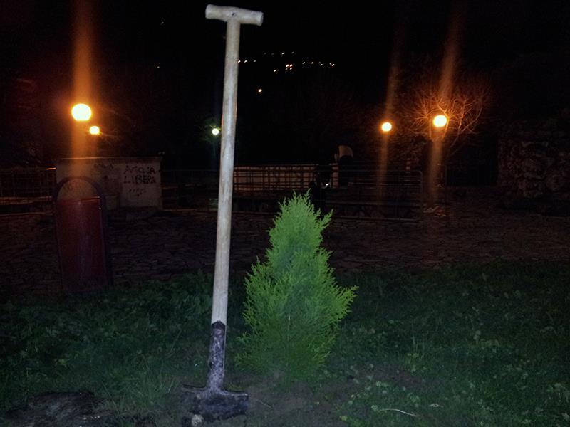 L'abete piantato nei giardini di viale De Gasperi