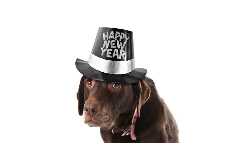 Felice anno nuovo anche dagli amici a quattro zampe