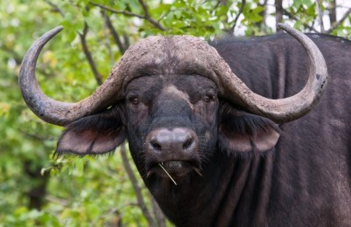 Per il Comitato Area Carbon il sindaco Castelli esagera con le bufale
