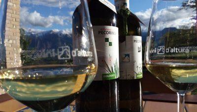 Vini d'Altura degustazione al ristorante Migliori Olive Ascoli